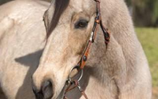 Украшаем одежду изображением коня — Своими Руками