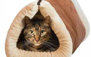 Как сделать домик для кошки? — Своими Руками