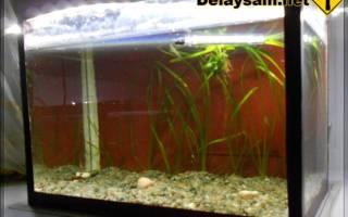 Мини-аквариум — Своими Руками