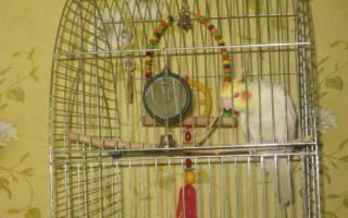 Игрушки для попугаев — Своими Руками