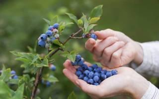 Сборщик ягод — Своими Руками