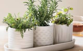 Домашний огородик — Своими Руками