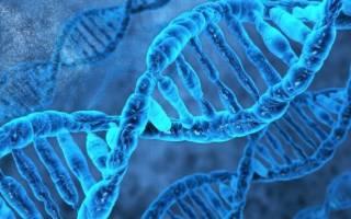 Получение ДНК в домашних условиях — Своими Руками