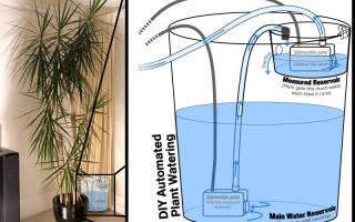 Устройство автоматического полива растений — Своими Руками